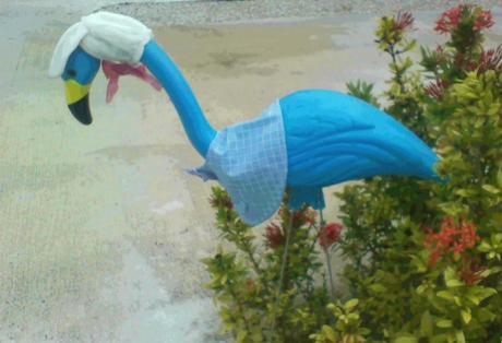 Clothed Flamingo