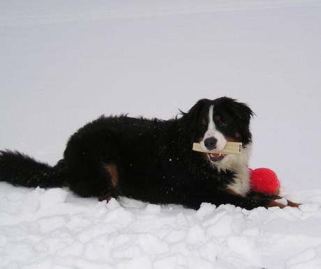 Laz the Snow Dog