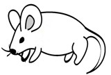 Mouse line art from Wikimedia Commons