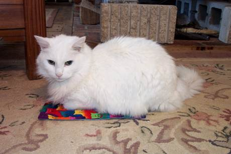 Best Cat: Ruff and His Personal Rug