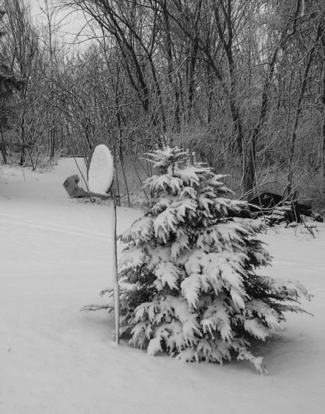 Snow on the Dish